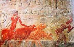 Figure 16. Cattle fording Scene with Calf, Tomb of Ty 5th Dynasty. Photograph courtesty of Osirisnet