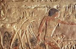 Figure 9. Hunting Dogs, Tomb of Ptahhotep Fifth Dynasty Saqqara. Photograph courtesy of Osirisnet