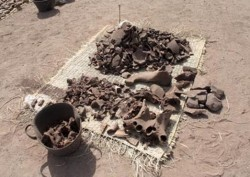 Figure 6-Hippo Bones
