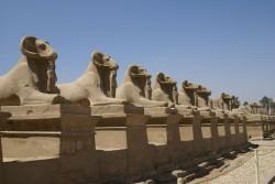Amun as ram